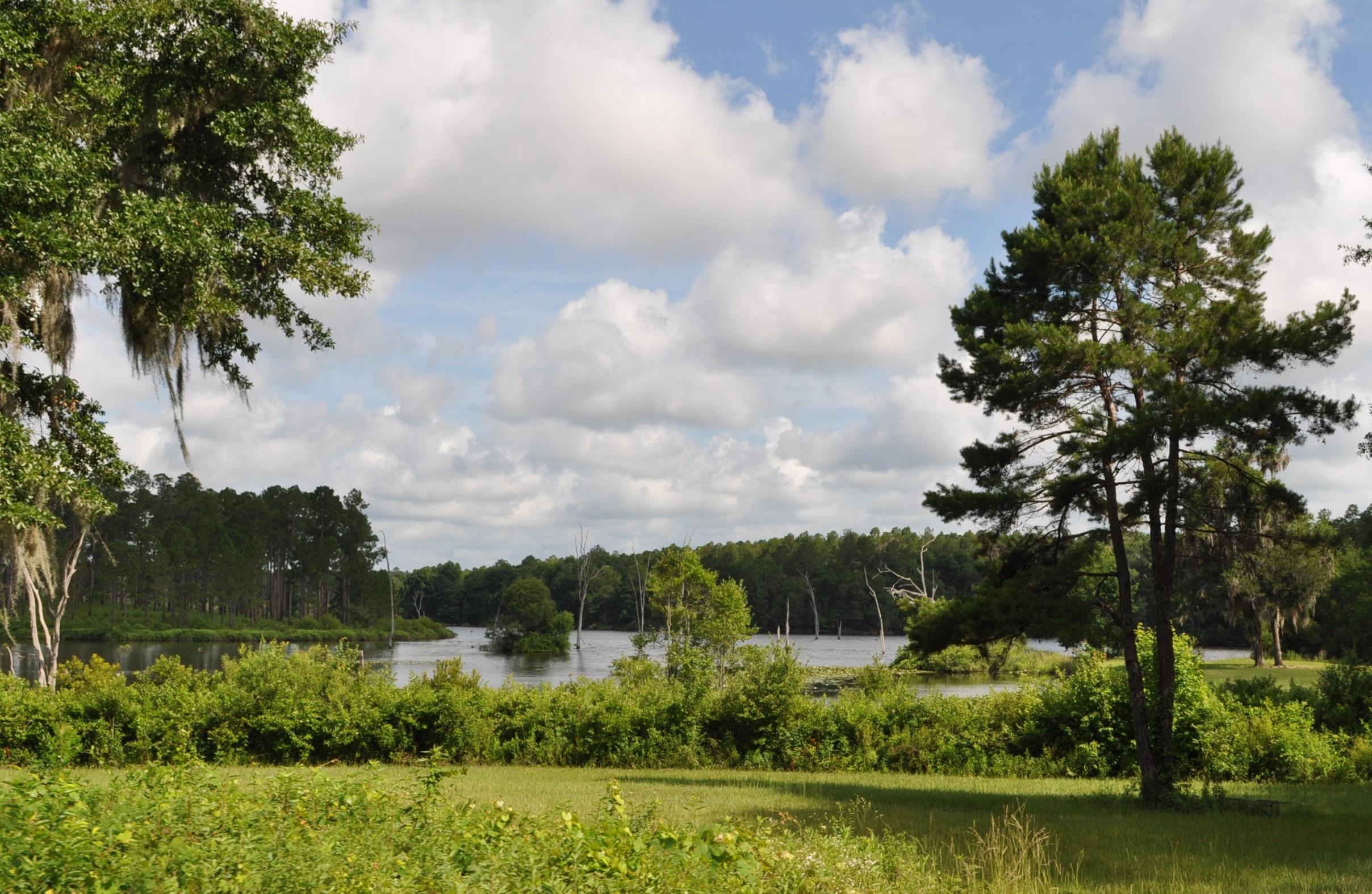 Langwood Plantation Langdale Capital Assets